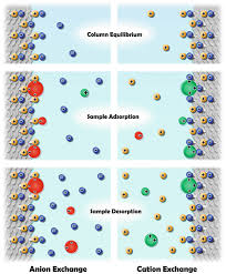 Ion Exchange Chromatography Basic Principles And