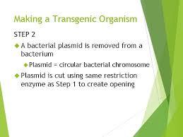 Dec 26, 2018 · pros of cloning. Transgenic Organisms What Is A Transgenic Organism Transgenic