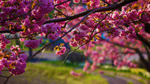 Wallpaper : flowers, nature, branch ...