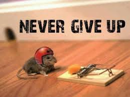 Image result for never ever give up