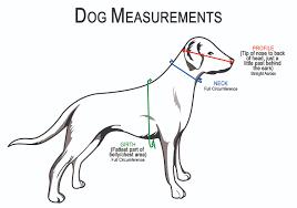 Meticulous Harness Measurement Chart 2019