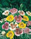 Садовые цветы на букву к и 2