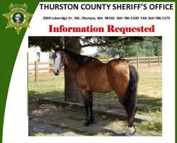 Necropsy Performed On Yelm Horse Reveals Tongue Was Intentionally
