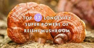 Top 17 <b>Longevity</b> Powers of <b>Reishi Mushroom</b> (Backed By Science ...