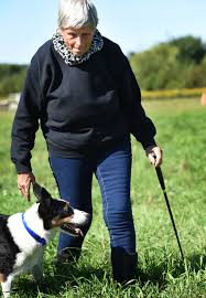 Sheepdogs do all the work — and love it, WI trainer says