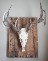 19 best skull european mount images on deer head decor