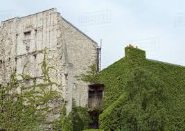 Ivy-covered building - Stock Photo - Dissolve