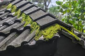 a roof with moss on it
