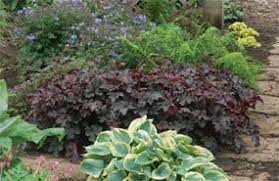 Small Picture Garden Plans For Zone 7 Best Loropetalum Chinense Zones Full Sun