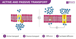 3 Types Of Passive Transport Difference Between Active Transport And Passive Transport