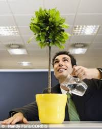 office greenery. Fine Greenery Benefits Psychologists Found That Introducing Greenery To Spartan  Workplaces Led A 15 Per Cent For Office Greenery