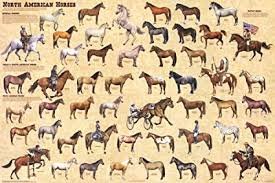 North American Horses Educational Chart Poster 36 X 24in
