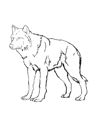 Anime Printables Wolf Coloring Pages Printable Grey Wolf Coloring