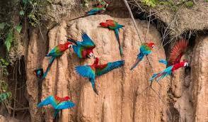 نتيجة بحث الصور عن peru bird watching