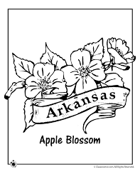 Small Picture Arkansas State Flower Coloring Page Woo Jr Kids Activities