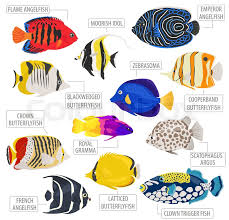 Clown Fish Identification Chart Freshwater Aquarium Fish Breeds Icon Stock Vector
