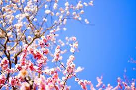 「梅の花」の画像検索結果