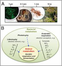 Bacteria Animal And Plant Cell Venn Diagram Animals In A Bacterial World A New Imperative For The Life