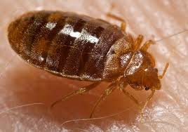 Bed Bugs In Bathroom Extraordinary The Best Way To Reduce Your Risk Of Bed Bugs Is To The GateThe Gate