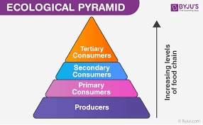 Ecosystem Pyramid Chart Food Web Producers Primary Secondary And Tertiary Consumers