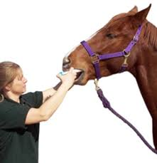 A Chilling Thought About Horse Deworming Schedules Expert