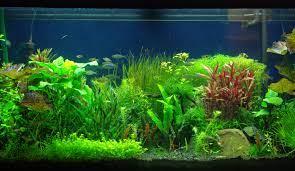 High Resolution Aquarium Background 3d ...