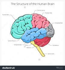 schematic 6930p the wiring diagram schematic of the brain vidim wiring diagram schematic