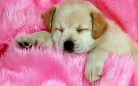 Cats and Dogs Sleeping Wallpapers on ...