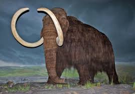 Genes of the Last Woolly Mammoths Were Riddled with Bad Mutations, Study  Finds | Smart News | Smithsonian Magazine
