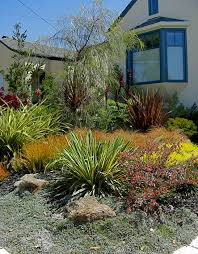 drought tolerant garden. Drought Tolerant Garden Design Endearing Inspiration Hot