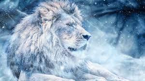 Download wallpaper 1920x1080 lion, snow ...