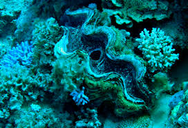 coral reef essay coral reefs mrs franks esl corals and coral reefs  diving dahab underwater photo essay angie away a