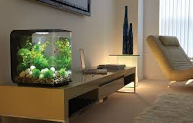 Amusing Modern Fish Tank Decorations Photo Decoration Inspiration