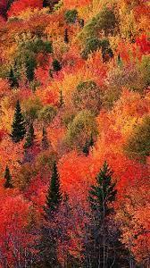 Fall Mountain Red Phone Wallpaper ...