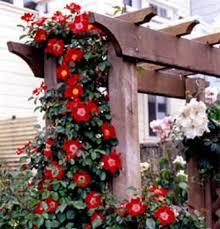 build garden arbor diy backyard arbor