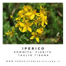 IPERICO SOMMITA' FIORITE TAGLIO TISANA