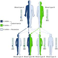 Parent And Child Blood Type Chart Abo Blood Group System Wikipedia