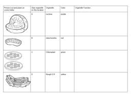Animal Cell And Plant Cell Diagram Cut Paste Activity