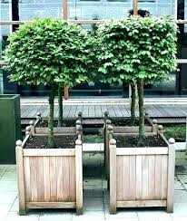 large planters for trees in tree planter box best ideas on recycled wooden