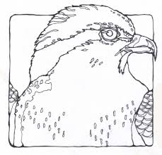 Coloring Pages : Delightful Osprey Coloring Page Kids Throughout ...