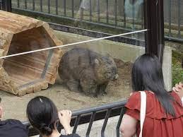 五 月 山 動物園