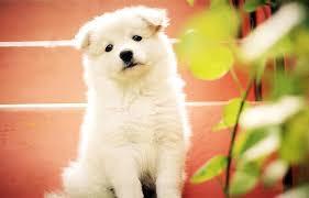 dog puppy cute adorable pet cute