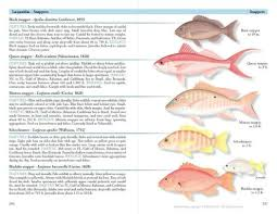Texas Fish Chart From Maine To Texas A Field Guide To Coastal Fishes Field