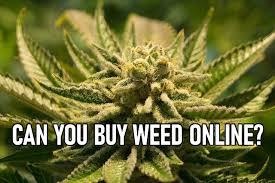 Can you buy weed online in South Africa? - gevaaalik.com