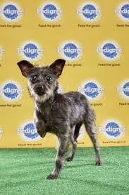 puppy bowl 2015 halftime. Beautiful Bowl Lucky To Puppy Bowl 2015 Halftime S