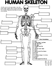 Small Picture Human Skeleton Coloring Page crayolacom