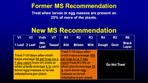 Caterpillars Infesting Mississippi Field Corn | Mississippi Crop ...