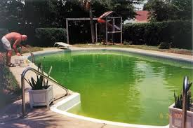salt water pool with fish. Green_pool Salt Water Pool With Fish S