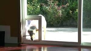 doggy door for glass door storm door with door storm door with dog door built in doggy door for glass