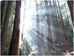 essay greening the environment waysgogreen blog greening the environment
